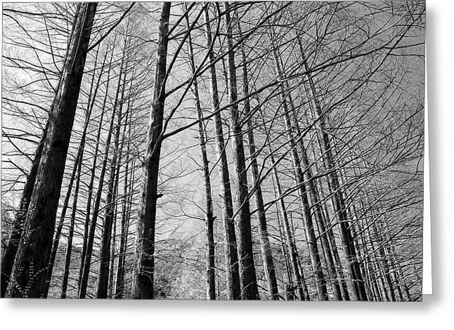 Hello Trees Greeting Card by Phoresto Kim