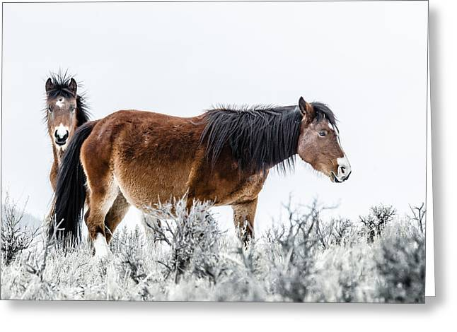 Hello Greeting Card by Yeates Photography