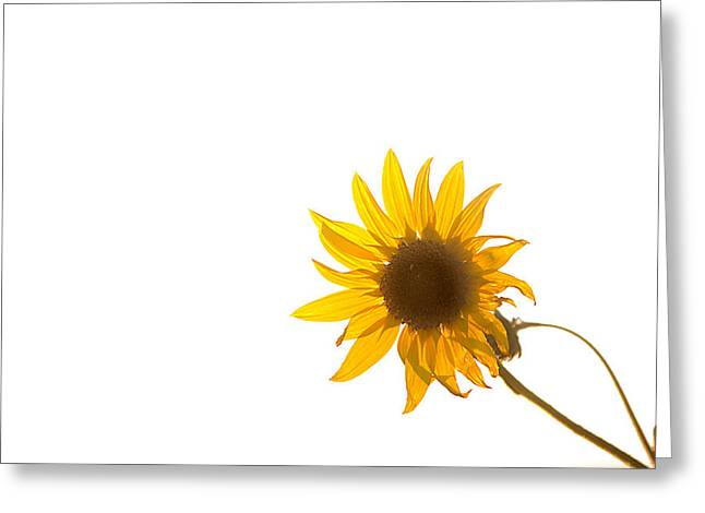 Hello Yellow Greeting Card by Peter Tellone