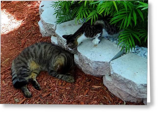 Hemingway Cats Greeting Card