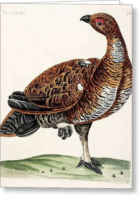 Hen Of The Wood Greeting Card by British Library