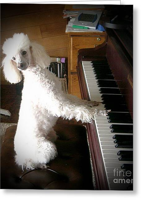 Henri Plays The Piano Greeting Card