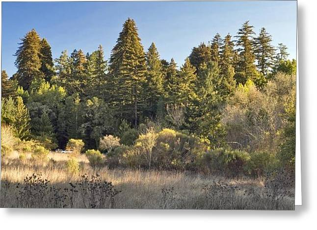 Henry Cowell Redwoods Panorama Greeting Card by Larry Darnell