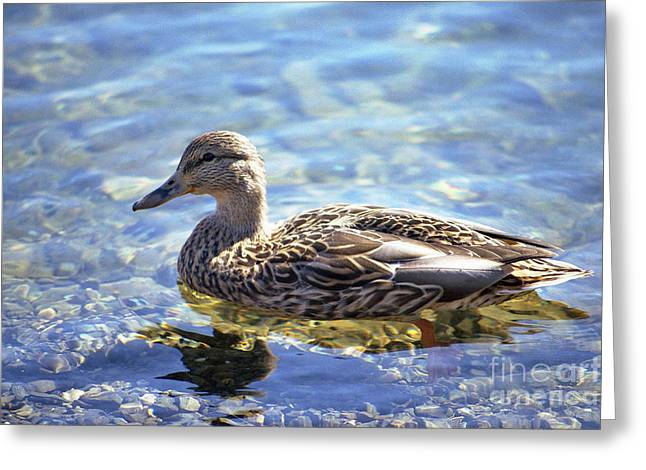 Hen's Reflection Greeting Card