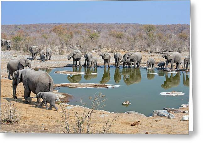 Herd Of African Elephants Drinking Greeting Card