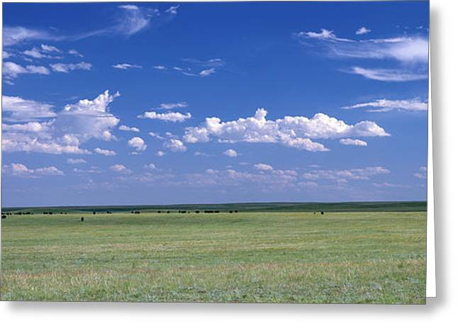 Herd Of Bison On Prairie Cheyenne Wy Usa Greeting Card by Panoramic Images