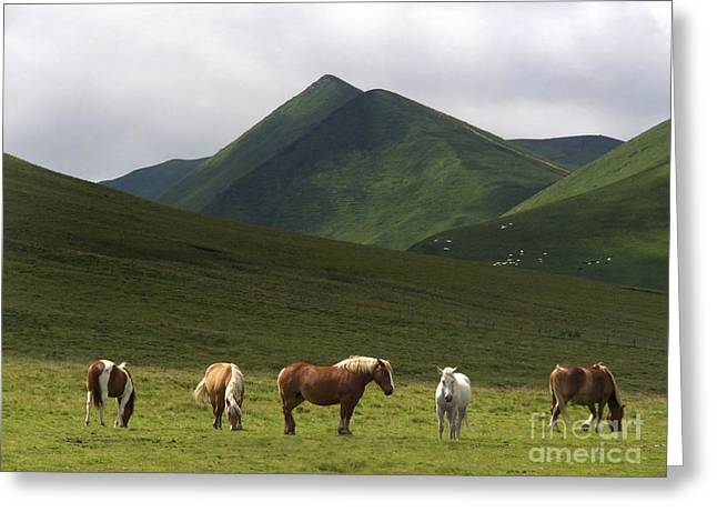 Herd Of Horses. The Sancy Massif. Auvergne. France. City	 Greeting Card