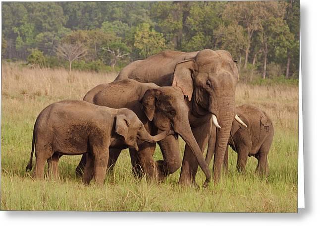 Herd Of Indian Asian Elephants, Corbett Greeting Card by Jagdeep Rajput