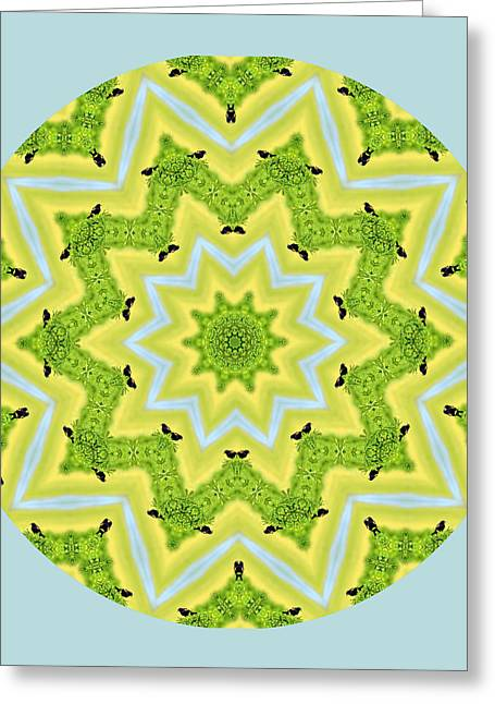 Here Birdie Birdie Mandala Greeting Card