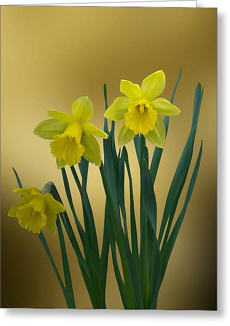 Greeting Card featuring the photograph Here Comes Spring... by Judy  Johnson