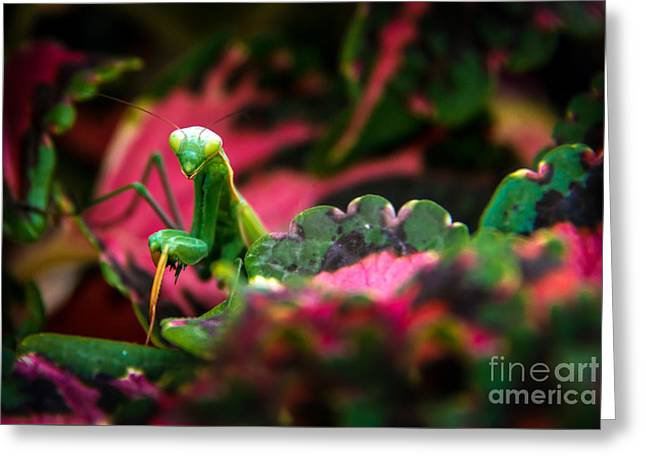 Here I Am Greeting Card by Robert Bales