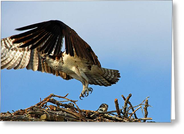 Here She Comes Greeting Card by Debbie Oppermann