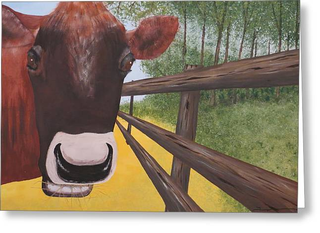 Here's Looking At Moo Greeting Card by Tim Townsend