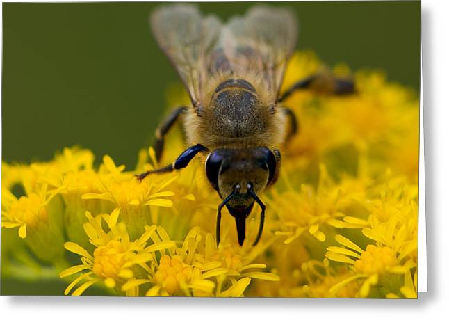 Here's Looking At You Honey Greeting Card by John Hoey