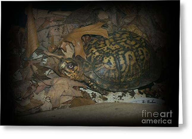 Greeting Card featuring the photograph Here's Looking At You by Sara  Raber