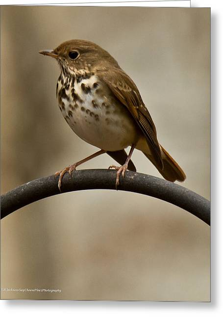 Greeting Card featuring the photograph Hermit Thrush by Robert L Jackson
