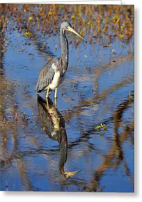 Heron And Reflection In Jekyll Island's Marsh Greeting Card