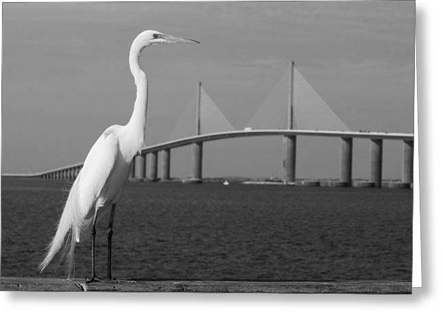 Greeting Card featuring the photograph Heron And Skyway by Daniel Woodrum