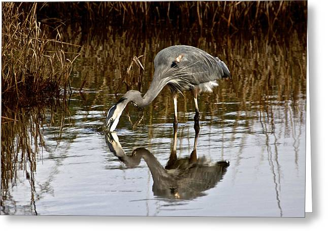 Heron At Assateague Greeting Card by Kathi Isserman
