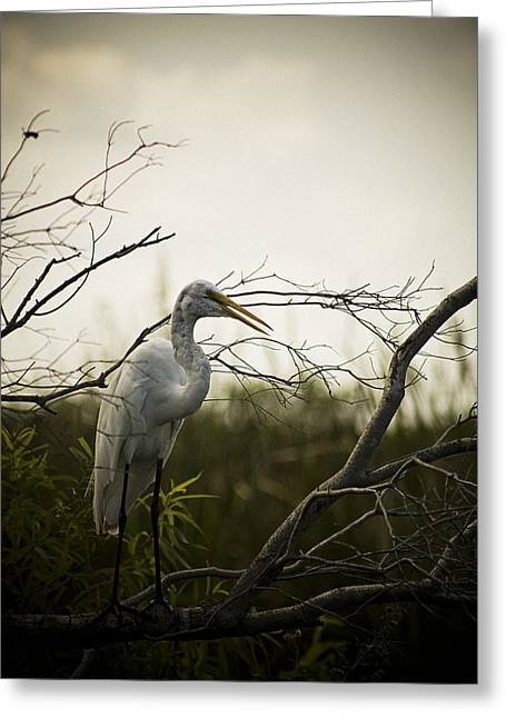 Heron At Dusk Greeting Card by Bradley R Youngberg