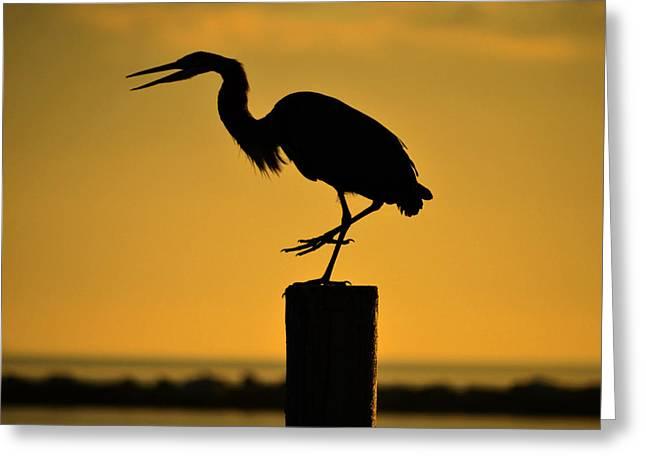 Heron At Sunrise Greeting Card by Leticia Latocki
