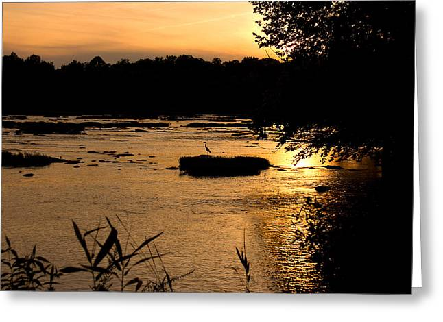 Greeting Card featuring the photograph Heron At Sunset by Andy Lawless