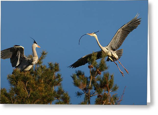 Heron Brings Twigs For The Nest Greeting Card by Izzy Standbridge