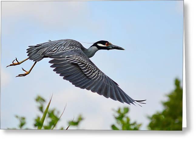 Heron Flight Greeting Card by Laura Fasulo