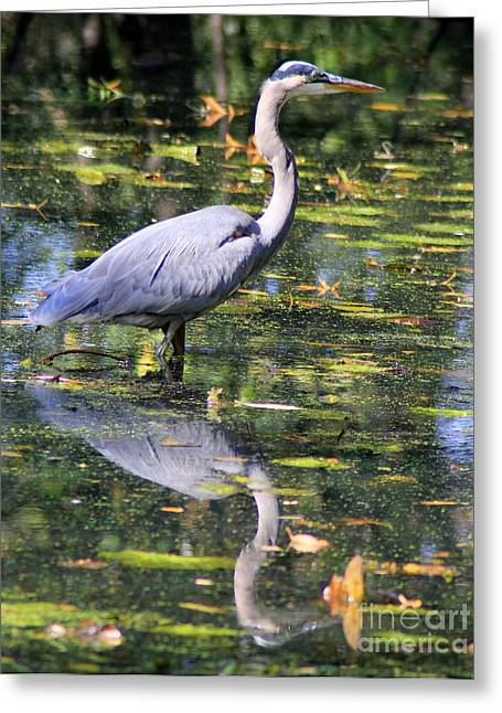 Greeting Card featuring the photograph Heron Hunter by Kenny Glotfelty