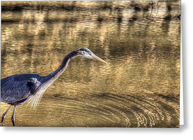 Heron Hunting In Maryland Canal Greeting Card by Francis Sullivan