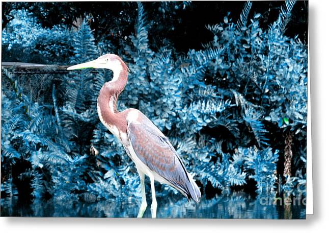 Heron In Blue Greeting Card