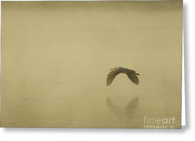 Heron In Flight  Greeting Card by Christopher Mace