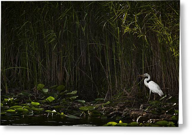 Heron In Grass Greeting Card
