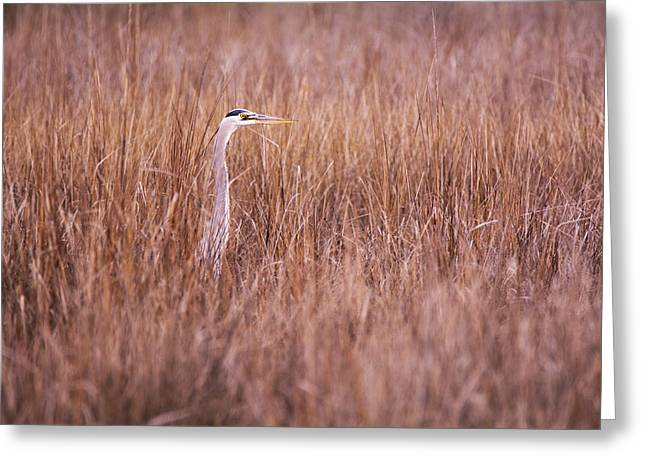 Heron In The Grass Greeting Card by Andy Smetzer