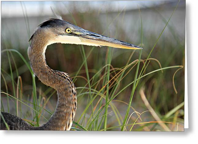 Heron In The Grass Greeting Card