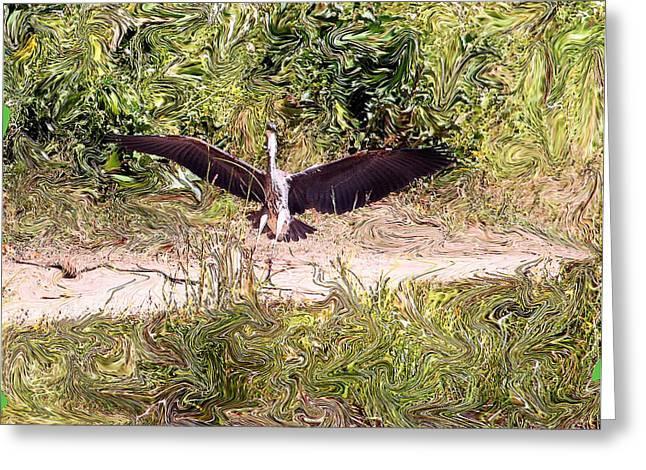 Heron Landing Greeting Card by Carolyn Reinhart