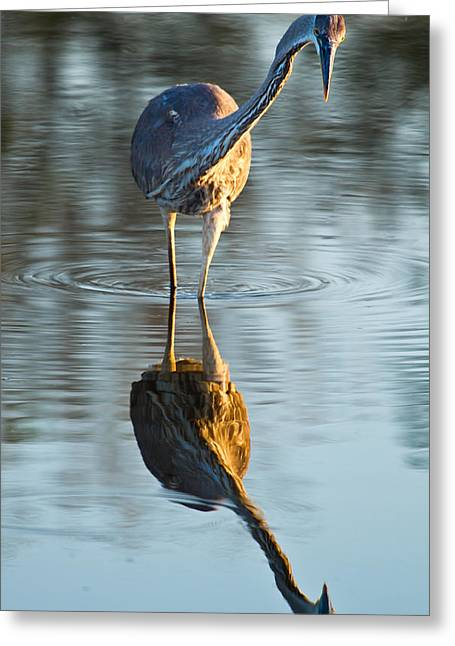 Heron Looking At Its Own Reflection Greeting Card by Andres Leon