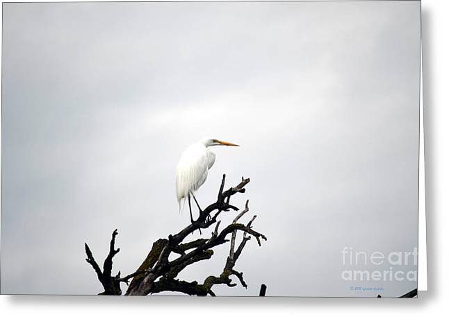 Heron On A Dead Tree Greeting Card