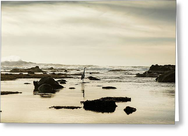 Heron On The Beach, Mavericks Beach Greeting Card by Panoramic Images