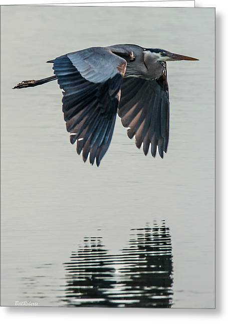 Heron On The Wing Greeting Card by Bill Roberts