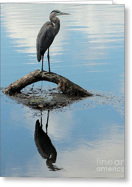 Greeting Card featuring the photograph Heron Reflection by Kenny Glotfelty