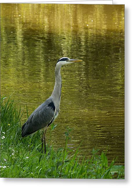 Heron Statue Greeting Card