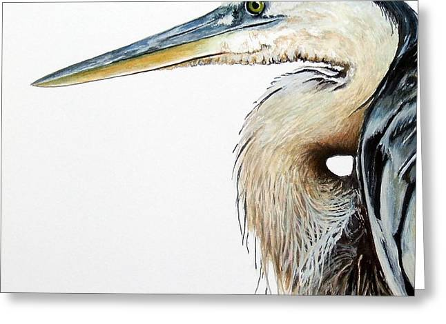 Heron Study Square Format Greeting Card