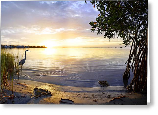 Heron Sunrise Greeting Card