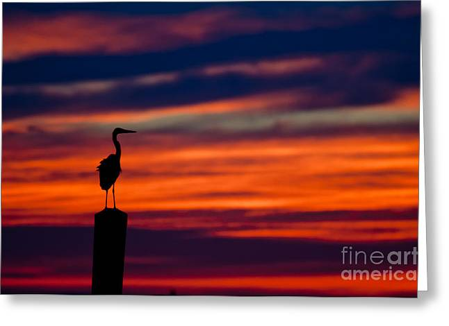 Heron Sunset Silhouette Greeting Card