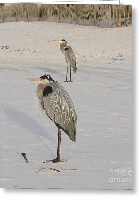 Heron Two Greeting Card by Deborah DeLaBarre