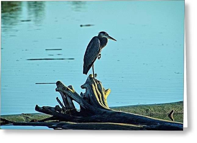 Heron Waiting For The Sun Greeting Card by Maralei Keith Nelson
