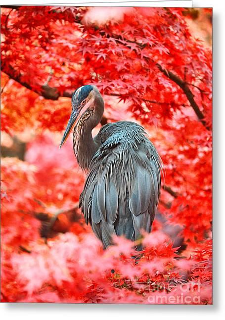 Heron Wonderland Greeting Card by Douglas Barnard