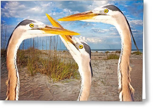 Herons Greeting Card by Betsy Knapp