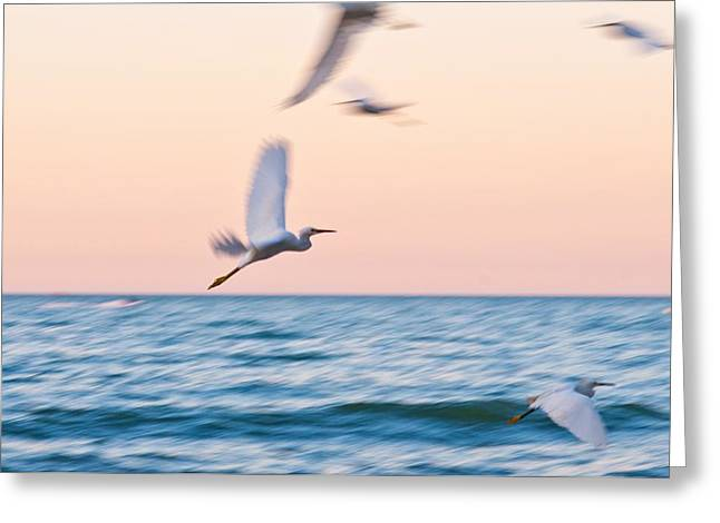 Herons Flying Over The Sea  Greeting Card